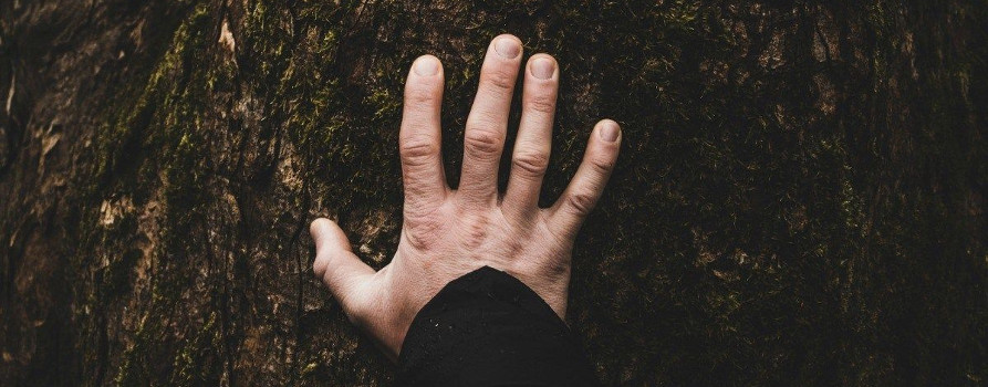 a man's hand outspread on a tree